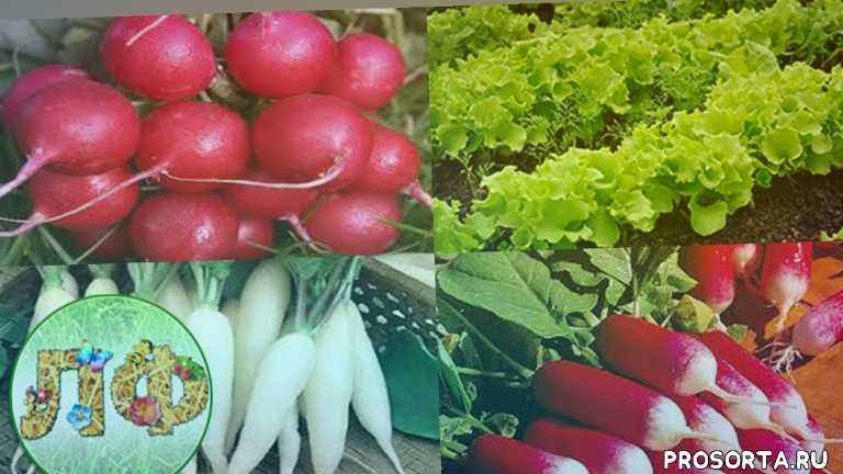 болезни, вредители, урожай, урожайный огород, у татьяны, полезное тв, во саду ли в огороде, цвет цветов