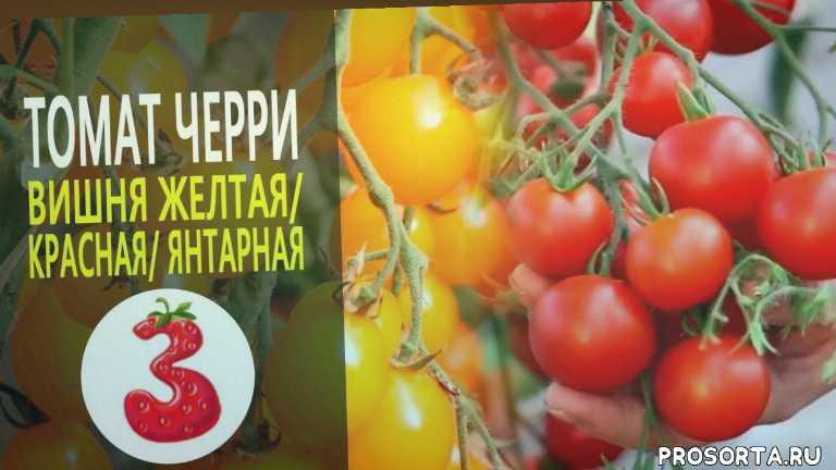 дача, огурец, лук, перец, огородник, садовод, ягода, яблоко