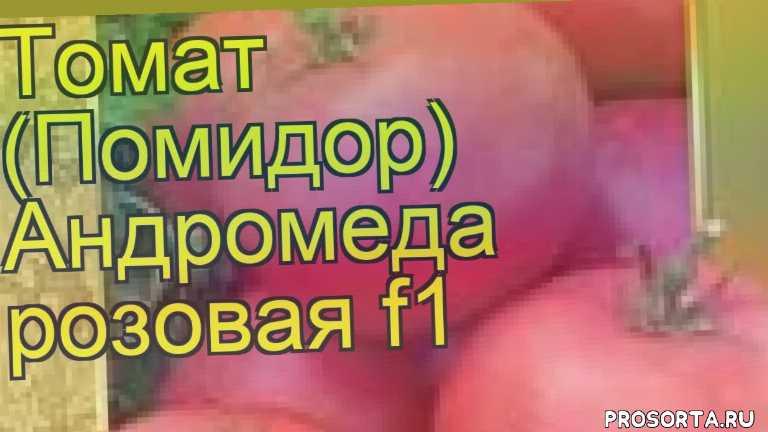 купить семена томата обыкновенного андромеда розовая f1, семена томата обыкновенного андромеда розовая f1, видео томат обыкновенный андромеда розовая f1, томат обыкновенный андромеда розовая f1 описание характеристик, краткий обзор томат обыкновенный андромеда розовая f1, томат обыкновенный andromeda rozovaya f1, томат обыкновенный андромеда розовая f1 описание, обзор томат обыкновенный андромеда розовая f1