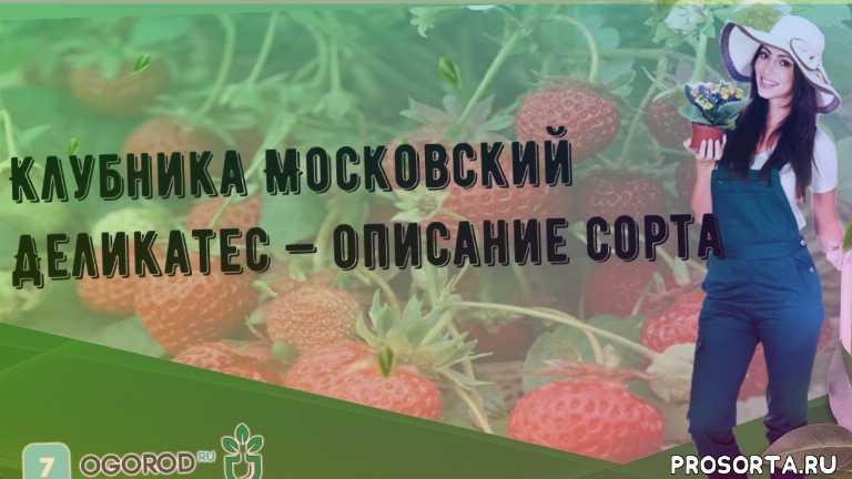 Клубника Московский Деликатес — описание сорта