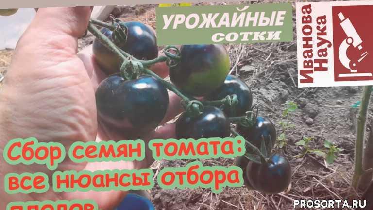 просто, дешево, продлить, вкусный, подкормка, кисть, увеличить урожай, лучшие семена