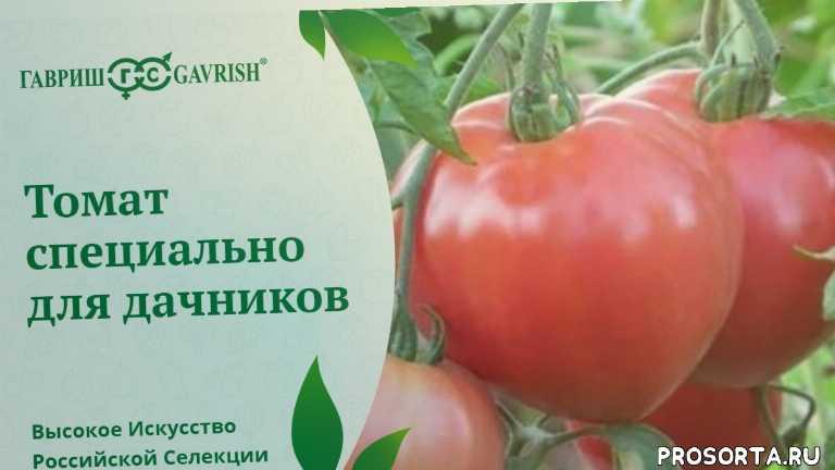 гавриш, томаты для пленочных укрытий, томаты гавриш томаты для открытого грунта, помидоры, огород, дача, низкорослые томаты, популярные сорта томатов