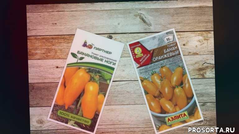 рассада томатов, помидор банан оранжевый, помидор банановые ноги, томат банан оранжевый, томат банановые ноги, томат, помидор