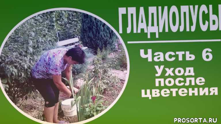 многолетники, для дачи, чем подкормить, луковичные, любимая усадьба, цветоводство, луковичные цветы, многолетние цветы