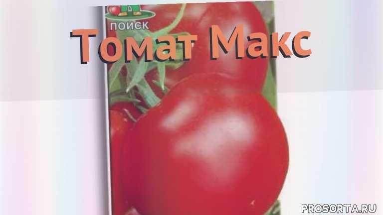 макс семена, семена, семена томата, семена томата макс, томат обыкновенный макс как сажать, томат обыкновенный макс обзор как сажать, томат обыкновенный макс обзор, томат макс обзор как сажать