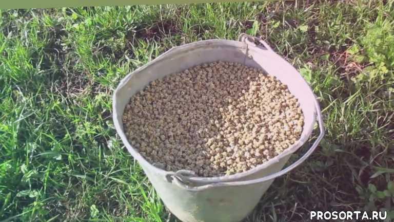 свои семена, выращиваем вами, семена кормовой свеклы, как вырастить семена, семена