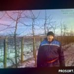 Яблони Белорусского сладкого зимой