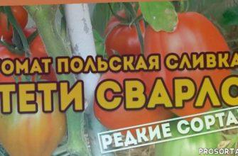 лучшие сорта помидоров, урожайные сорта помидор, самые урожайные помидоры, сорта помидоров, супер урожайные сорта томатов, урожайные томаты в теплице, лучшие сорта томатов для юга россии, лучшие сорта томатов для открытого грунта в сибири