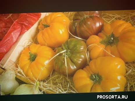 супер урожайные и сладкие томаты, томат ребристый, обзор ребристых томатов, томаты оригинальной формы, томаты новинки, шок от ребристых томатов, супер томаты