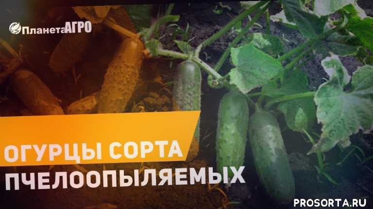 теплица уход и урожай, купить рассаду, рассада, болезни и вредители, удобрения и стимуляторы роста, клубни и луковицы, горшки для рассады, саженцы кустарников