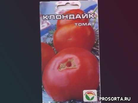 выращивание овощей, выращивание, помидоры, томаты, урожайные сорта томатов, огород, рассада томатов, томаты открытого грунта