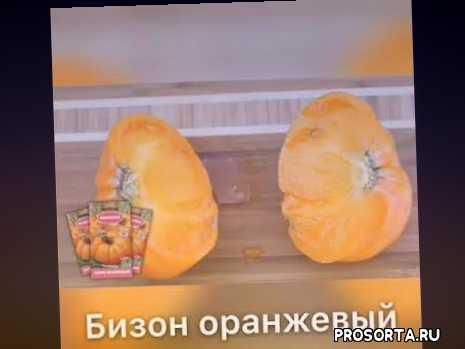 семена помидоров, семена томатов, магазин семян просад, prosad, просад, серия вкуснотека, семена серии вкуснотека, семена почтой