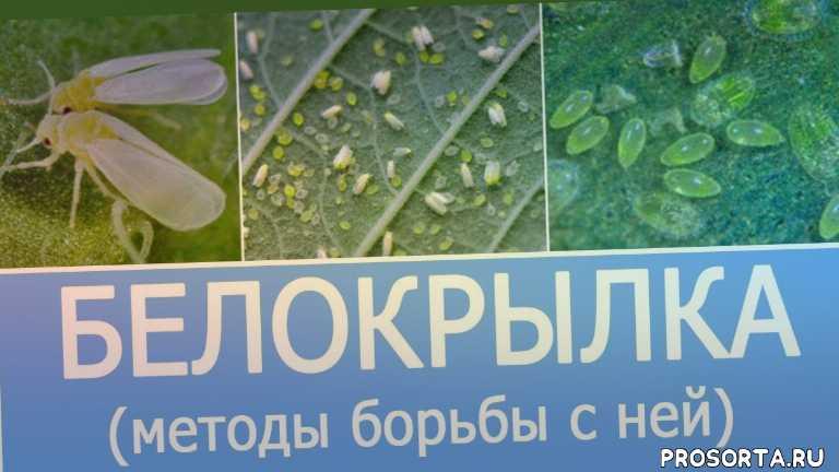 советы фермерам, советы агрономам, удобрения, семена, баклажаны, уход за томатами, выращивание томата, выращивание огурцов