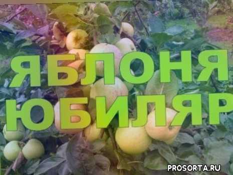 юбиляр, триплоидный сорт яблони, агротехника, саженцы, подвои, черенки, обрезка, садом