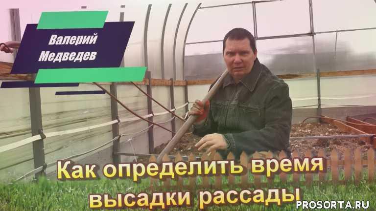 Как определить время высадки рассады