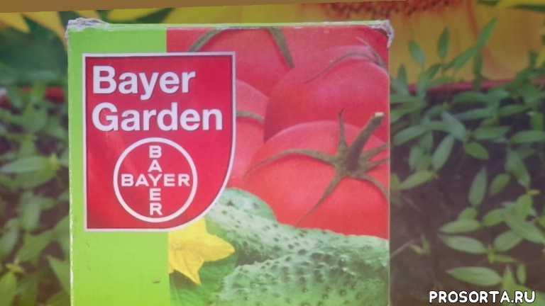 сад огород томаты черная ножка как спасти рассаду