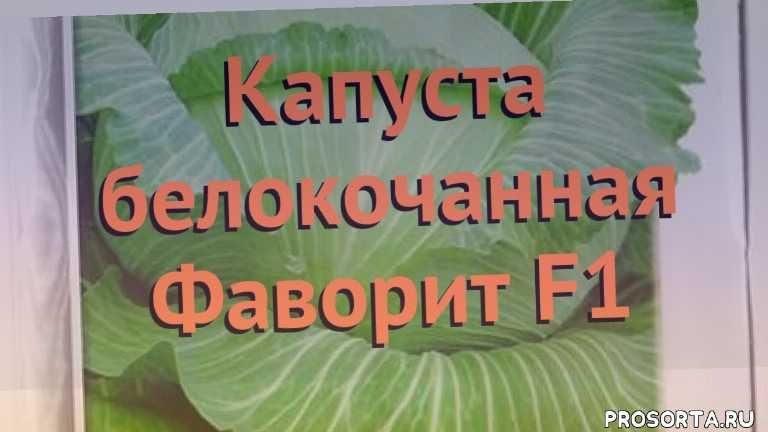 семена, капуста белокочанная фаворит f1 обзор, капуста фаворит f1 обзор как сажать, травы, белокочанная капуста фаворит f1 обзор как сажать, белокочанная капуста фаворит f1 обзор, белокочанная капуста, белокочанная капуста фаворит f1