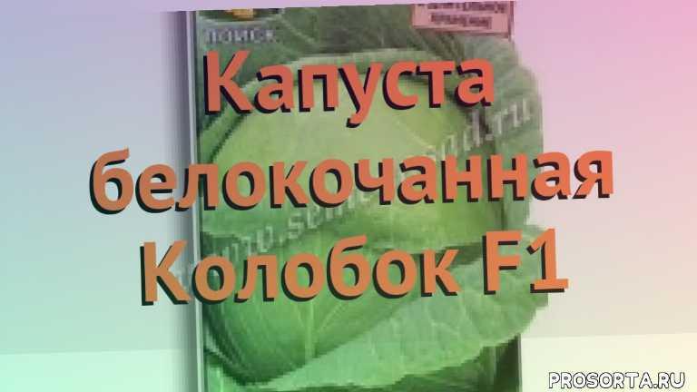 семена, капуста белокочанная колобок f1 обзор, капуста колобок f1 обзор как сажать, травы, белокочанная капуста колобок f1 обзор как сажать, белокочанная капуста колобок f1 обзор, белокочанная капуста, белокочанная капуста колобок f1