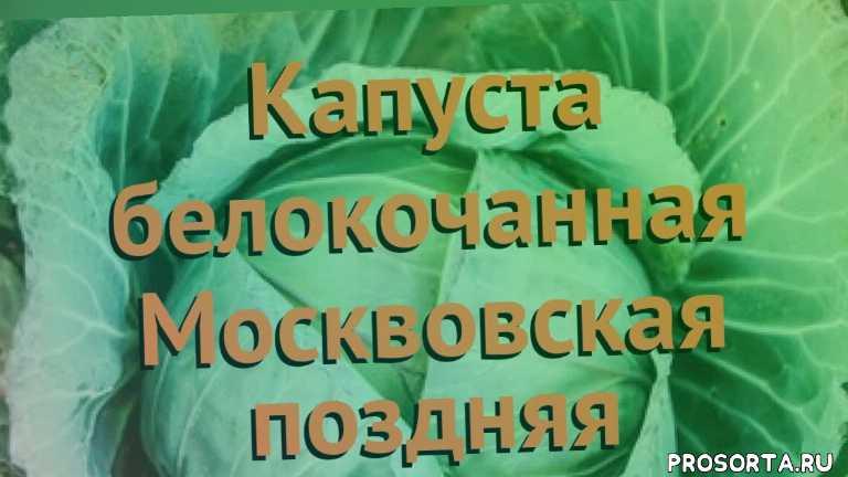 семена, семена капусты, капуста москвовская поздняя обзор как сажать, травы, белокочанная капуста москвовская поздняя обзор как сажать, белокочанная капуста москвовская поздняя обзор, белокочанная капуста, белокочанная капуста москвовская поздняя