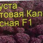 Капуста листовая (Кале Красная F1). Краткий обзор, описание характеристик, где купить семена
