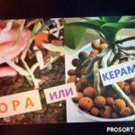 КЕРАМЗИТ ИЛИ КОРА? Какой субстрат лучше для Орхидей