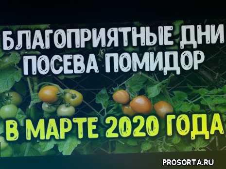 март 2020, садить, когда помидоры, для посадки помидор, лучшие дни марта 2020, посев семян помидоров, посевы, семена