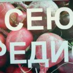 Когда сеять редис в Сибири? Какие сорта выбрать?