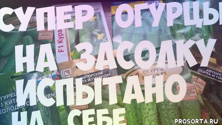 огурцы, обзор семян огурцов, вкусные огурцы, лучшие сорта огурцов, огурцы для теплицы, огурцы для открытого грунта, урожайные огурцы