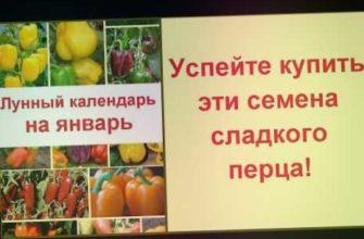 семена болгарского перца, лучшие семена перцев, какие семена перца лучше купить, перец описание сорта фото отзывы, перец характеристика, описание сортов сладкого перца, сорта перца, посадка календарь