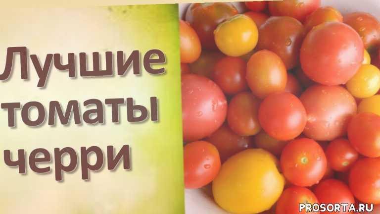 домашний помидор, сорт помидор, характеристика томата, описание томата, сорта томатов, выращивание томатов, томаты, помидоры