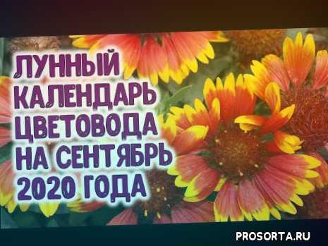 агроастрология, на сентябрь 2020, лунный календарь цветовода, сентябрь 2020 года, агро гороскоп, агрогороскоп, многолетние цветы, работа с цветами