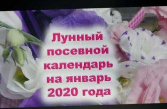 в январе 2020, когда сажать раннюю капусту на рассаду, микрозелень в январе, семена овощей, семена цветов, подзимний посев, лунное затмение 10 января 2020, телец