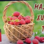 Малина Химбо Топ и Таганка радует в середине ноября