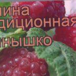 Малина традиционная Солнышко (rubus solnyshko) ? Солнышко обзор: как сажать, саженцы малины Солнышко