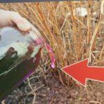 Малину будете собирать ведрами! Уход за малиной весной после которого ягод просто пропасть!