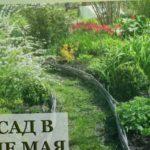 Мой сад в конце мая / Алёнин сад