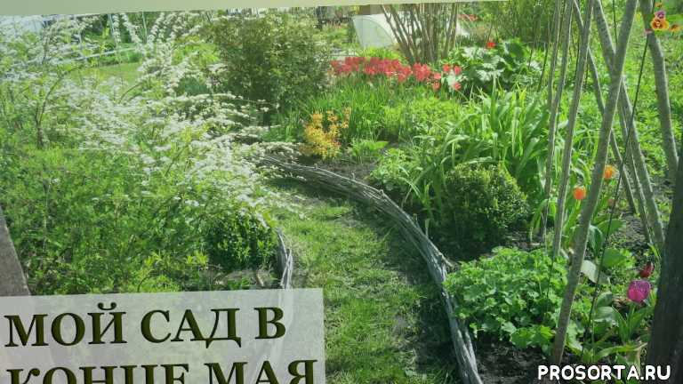 аленин сад, сад в мае
