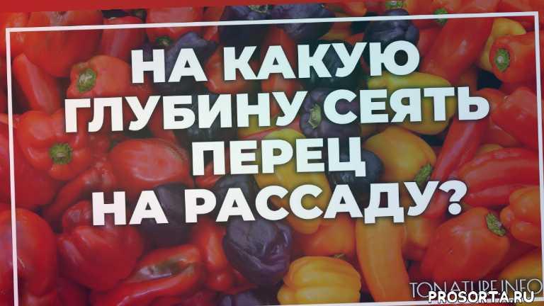 земля дляперец, почва для перец, перец полив, перец вредители, перец болезни, перец удобрение, перец подкормка, перец пересадка