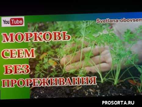 как садить морк, как посадить морковку, посадка морковки, как посадить морковь весной, как садить морковь весной, посадка моркови весной, как посадить морковь, посадка моркови