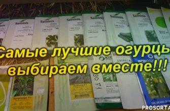выращивание, теплица, как выбрать семена огурцов, какие огурцы лучше, семена огурцов, огурцы