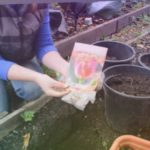 Необычная посадка тюльпанов для нового облика сада