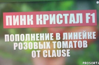 выращивание розового томата, розовый томат, семена clause, семена владам-юг, как выращивать овощи, семена овощей