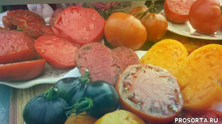 #томаты, #помидоры, коллекционные, сезон2020, сорта, обзор