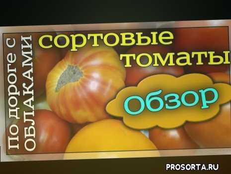 томаты поиск, серия вкуснотека, вкуснотека, обзор сортов томатов, гранатовый браслет, воловье сердце, медовый салют, желтый банан