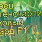 Огурец Гепард F1 (Огурец). Краткий обзор, описание характеристик, где купить семена cucumis sativus