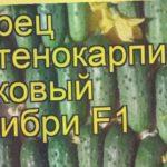 Огурец (Колибри). Краткий обзор: Огурец описание характеристик, где купить семена
