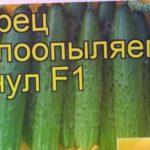 Огурец Манул (Огурец). Краткий обзор, описание характеристик, где купить семена cucumis sativus