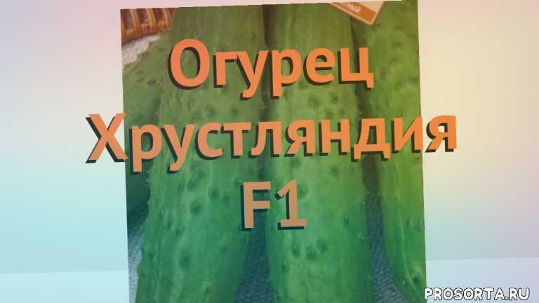 огурец обыкновенный хрустляндия f1 как сажать, огурец обыкновенный хрустляндия f1 обзор, огурец хрустляндия f1 обзор как сажать, травы, обыкновенный огурец хрустляндия f1 обзор как сажать, обыкновенный огурец хрустляндия f1 обзор, обыкновенный огурец, обыкновенный огурец хрустляндия f1