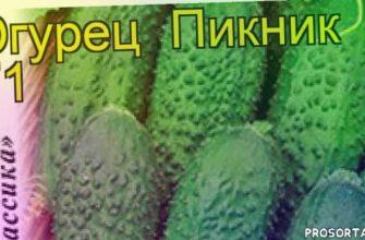 огурец пикник f1 какие растения сажают рядом, огурец пикник f1 посадка и уход, огурец пикник f1 уход, огурец пикник f1 посадка, огурец пикник f1 отзывы, где купить семена огурец пикник f1, купить семена огурца пикник f1, семена огурец пикник f1