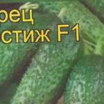 Огурец Престиж F1 (Огурец). Краткий обзор, описание характеристик, где купить, семена